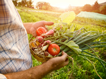 Restauration collective : s'approvisionner en produits locaux - Blog Ingrédients de confiance